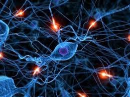 It's all about the Synapses